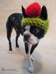crochet dog hat free patterns | CROCHET DOG HAT - Crochet — Learn How to Crochet