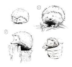 Hedgehog sketches