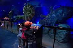 Must-do attractions at Sea World for kids