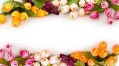 Vector Rose Flower