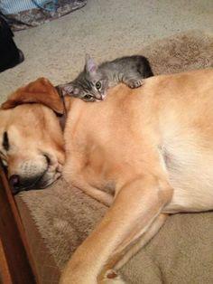 かわいすぎる猫と犬の仲良し画像 01|ねこLatte+