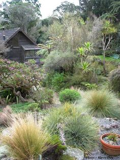 native garden sydney beaches pinterest native gardens gardens and landscaping - Native Garden Ideas Nz