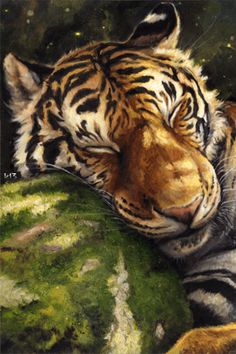 Animation Tiger sweetly asleep, his head resting on the moss-covered stone, animator chucha (k13), SIFCO Tiger sweetly asleep, her head resting on a stone covered with moss, animator chucha (k13)
