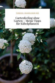 Gartenfeeling ohne Garten – Meine Tipps für Kübelpflanzen Dream Rooms, Flower Power, Fruit, Eskimo, Flowers, Plants, Gardening, Garden Decorations, Strudel