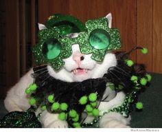 Funny Memes For St Patricks Day : Morning after st. patrick's day dog memes pinterest dog
