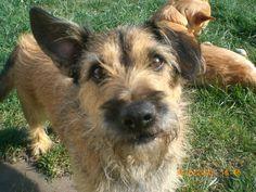 Elias (Border Terrier, Cairn Terrier, Dackel, Jack Russell Terrier)