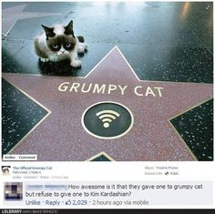 Grumpy Cat gets a star on the Walk of Fame! I love you Grumpy Cat! Funny Cats, Funny Animals, Cute Animals, Clever Animals, Funniest Animals, Crazy Cat Lady, Crazy Cats, Gato Grumpy, Grumpy Kitty