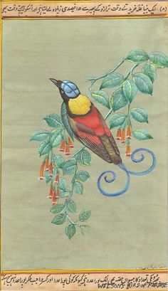Indian Miniature Art Rare Handmade Indonesian Wilson's Bird of Paradise Painting