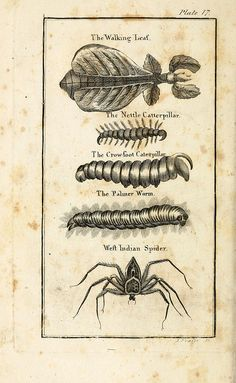 creepy worm, catterpillar, walking leaf, spider. Compiled from Swammerdam, Brookes, Goldsmith, & Co. | The natural history of insects (1792)
