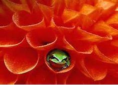 Little Frog in Flower wallpaper - ForWallpaper.com