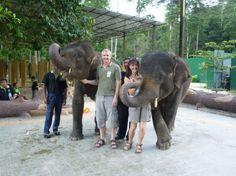 Tour Kuala Lumpur's Elephant Orphanage Sanctuary