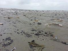 vloedlijn na een storm