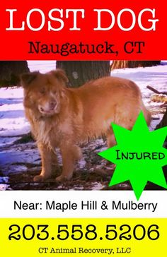 reunited 4/9 Liked · 14 mins near Naugatuck, CT · Edited ·    MISSING IN NAUGATUCK:  Chance is missing in Naugatuck. Please call in any sightings immediately. Chance is injured. He was wearing a collar and weighs about 70lb.   Thank you! share away, let's get a reunion.