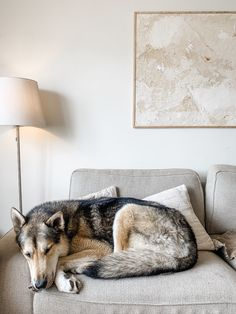 Original art but Kaleen Cameron. Her wolf pup taking a nap in her home.