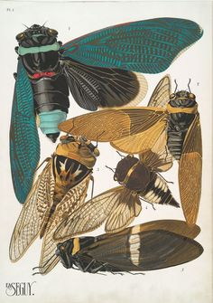 From NYPL's Blogs: Where Are All The Cicadas? http://www.nypl.org/blog/2013/06/12/where-are-all-the-cicadas