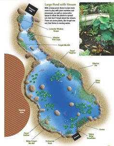 How to Plant a Large Pond