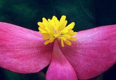 Fotografía de la flor