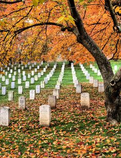 Autumn Heroes Photograph - Arlington Cemetery -- My daddy is in Arlington. Military Cemetery, Virginia Is For Lovers, Dc Travel, National Cemetery, God Bless America, Memorial Day, Washington Dc, Autumn, Fall