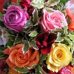 What the color of Roses mean