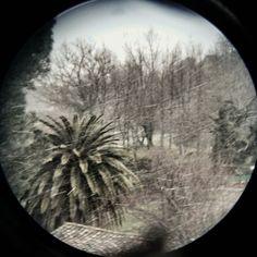 Palmeras en la nieve. Por fin llegó el invierno a la Sierra de Gata. Villamiel recibe al frío que no deja plaga sana.