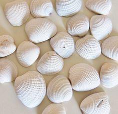 Seashell Supplies - Lot of 20 Cross Barred Venus Sea Shells - Small White Shells Craft Supply - Beach Wedding DIY on Etsy, $5.75