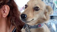 Zarina – 15 month old female Cross-Breed dog for adoption