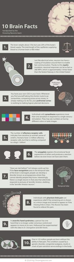 10 Brain Facts   #Infographic #Brain #Facts