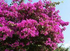 Jardim da Terra: DICA DO DIA: Como ter um Jardim Florido o Ano Todo