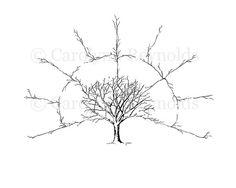 Blank 3 Generation Family Tree Fan Chart