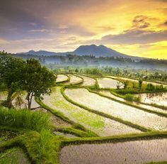Rice fields in Karangasem, Bali, Indonesia
