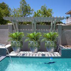 14 Awesome Planters Around Pool Images Potted Plants Potted