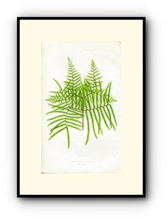 Edward Joseph Lowe Fern (Gleichenia Rupestris) Antique Botanical Print, 1860 Wood Block Engraving, Book Plate by TheOldMapShop on Etsy