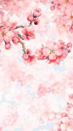 Delicate pretty spring cherry blossom watercolor speck iphone x. Flower Background Wallpaper, Flower Backgrounds, Pink Wallpaper, Wallpaper Backgrounds, Wallpaper Space, Pretty Backgrounds, Phone Backgrounds, Mobile Wallpaper, Pretty Wallpapers