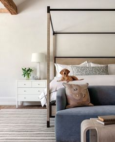 The best feeling in the world is lying down in this warm room built with a light colored rug and bed with your beloved pet. Photography: @kerrykirkphoto; Architecture: @newberryarchitecture; Interior Design: @baileyvermillioninteriors; Builder: @goodchildbuilders; Landscape: @serenagibsondesign Colorful Rugs, Area Rugs, Interior Design, Pillows, Architecture, Bedroom, House, Furniture, Pet Photography