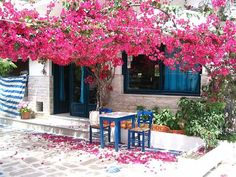 Bougainvillea and Blue taverna chair