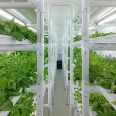 shipping container farm puts a full acre of lettuce in your backyard. Cropbox pop-up shipping container farms allow you to have a farm anywhere What Is Greenhouse, Greenhouse Farming, Hydroponic Farming, Backyard Aquaponics, Hydroponic Growing, Growing Plants, Vertical Hydroponics, Diy Hydroponics, Aquaponics Plants