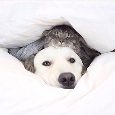 Ungewöhnliche Tierfreundschaften ......Katze und Hund
