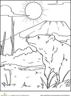 Color the Grizzly Bear Worksheet