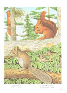 VINTAGE SQUIRREL PRINT Animal Print 1970's Woodland by GinAndJunk Squirrel Pictures, Hunger Games, Woodland, Moose Art, Wildlife, Animal Prints, Handmade Gifts, Animals, Etsy