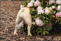You don't react to farts anymore. | 9 Ways To Know You're A French Bulldog Owner