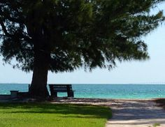 Bench by the beach Anna Maria Island, Outdoor Furniture, Outdoor Decor, Bench, Therapy, Water, Gripe Water, Benches, Counseling
