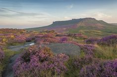 Purple Sunrise, Carl Wark, Peak District, England by Jason Riley  The purple heather in August across the moors in the Peak District is a real pull for photographers. This was my third early morning foray ...  https://f11news.com/24/06/2017/purple-sunrise-carl-wark-peak-district-england-by-jason-riley