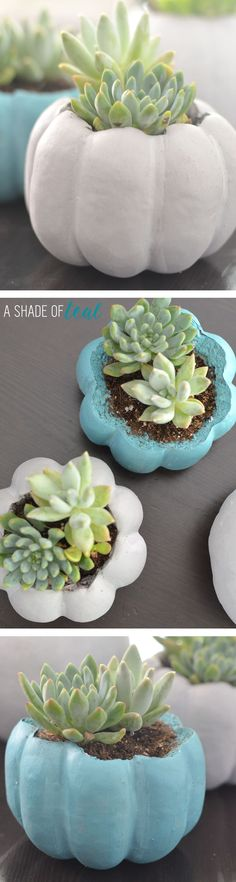 DIY Mini Pumpkin Planters, how to make these cute succulent planters out of plastic pumpkins. | A Shade Of Teal