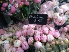 Pink peonies in Paris