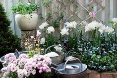 Pastellisävyissä on aina mukana valkoista, ja siksi pastellit ja valkoinen sopivat luontevasti yhteen. Tarkan värisilmän omistava puutarhuri on sommitellut tulppaanien eteen lemmikkejä ja helmililjoja. Samaa värimaailmaa kutoo yhteen taustan sininen alppikärhö (Clematis alpina), ruukun valkea lumihiutale (Sutera cordata) ja kannujen keskellä kukkiva vaaleanpunainen akileija (Aquilegia).