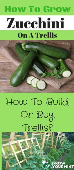Do you want to have a fresh batch of zucchini ANY TIME? This detailed guide will help you from A to Z!