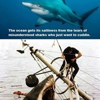 Scientific Facts About Sharks