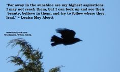 Image - Bigs the crow, by Traci York; Quote - Louisa May Alcott