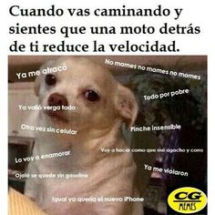 1005 best images about memes 100 mexicanos on New Memes, Love Memes, Dankest Memes, Spanish Jokes, Funny Spanish Memes, Funny Images, Funny Pictures, Art Quotes Funny, Mexican Memes