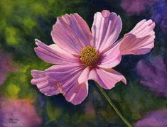 Pink Cosmos art watercolor painting print of original floral painting by Cathy Hillegas, etsey